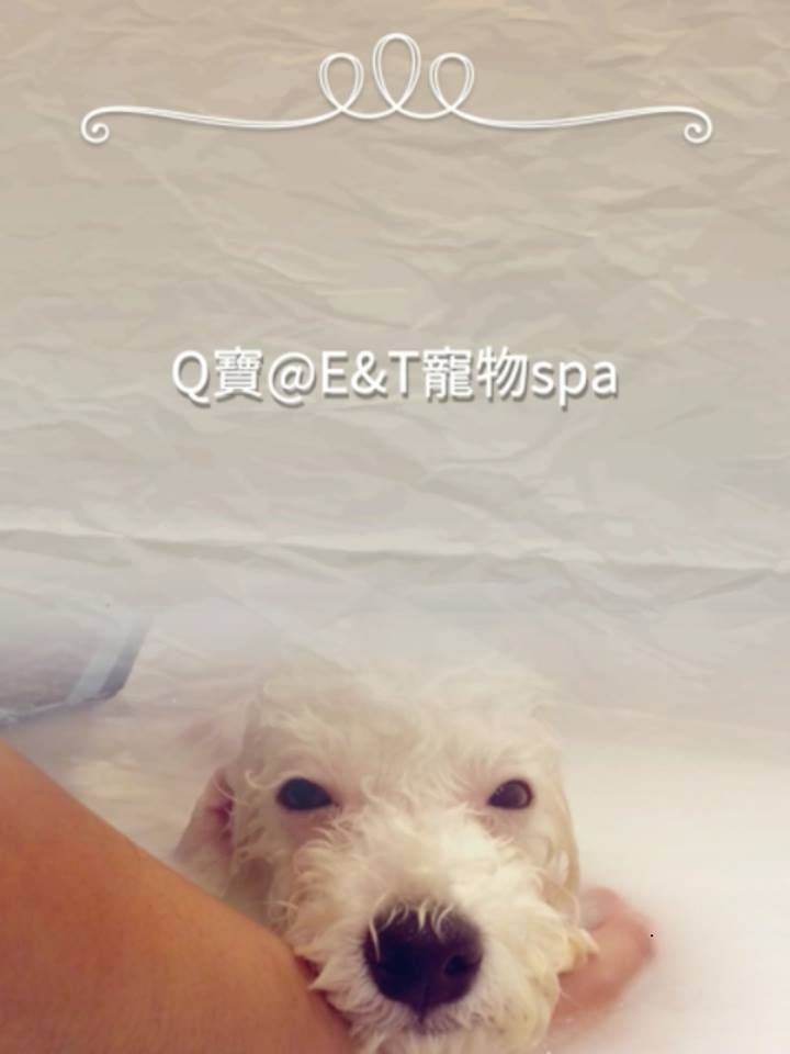 E&T Pet Spa